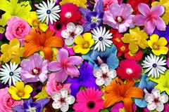Creactivomx-161-F. Colorfully floral scene spring garden Royalty Free Stock Photography