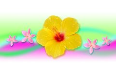 Creactivomx-173-F. Yellow beauty hibiscus flower with pink five star flowers Royalty Free Stock Photo