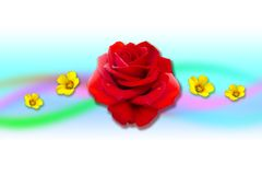 Creactivomx-175-F. Red beauty rose flower with ywllow flowers Stock Photography