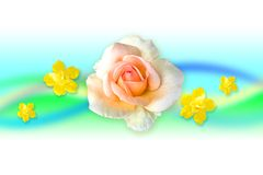 Creactivomx-176-F. White beauty rose flower with yellow flowers Royalty Free Stock Photography