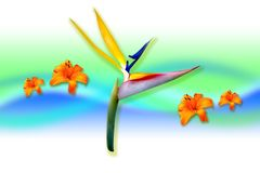 Creactivomx-177-F. Beauty paradise bird flower with orange little lilly flowers Royalty Free Stock Image