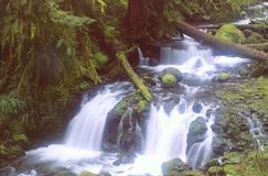 Creak Dreams. Upstream from Multnomah Falls, Columbia Gorge, Oregon Royalty Free Stock Photography