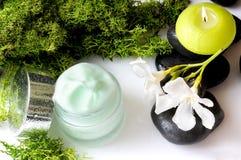 Cream вид спереди водорослей опарника и белая предпосылка Стоковое фото RF