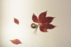 Cream background with chestnut and leaves Royalty Free Stock Photos