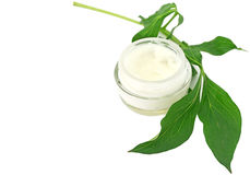 Cream bio skin care Royalty Free Stock Image