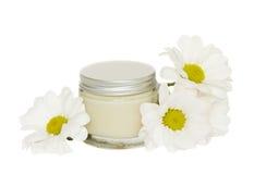 Cream and camomile Stock Image