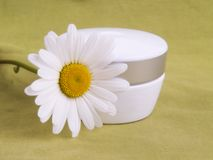 Cream and camomile Stock Photos