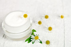 Cream and camomiles Stock Images