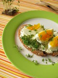Cream cheese, egg and cress on bread Royalty Free Stock Photo