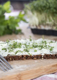Cream Cheese and Garden Cress Royalty Free Stock Image