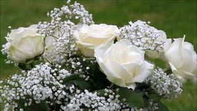 Cream color roses bouquet with white gypsophila stock video