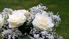 Cream color roses bouquet with white gypsophila stock video footage