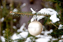 Cream-colored Christmas ball hanging on a tree Stock Photography