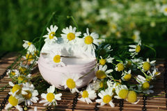 Cream with daisies Royalty Free Stock Photos