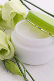 Cream with Green Rose Royalty Free Stock Images