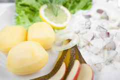 Cream herring with cucumber, potatoes and salad Stock Images
