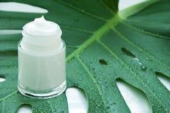 Cream on a leaf stock photos