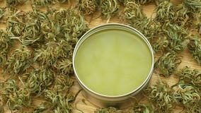 Cream medicinal cannabis hemp and cannabidiol CBD harvested dried of seeds quality for production of ointments, relieves. Cream medicinal cannabis hemp and stock video footage