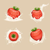 Cream Milk Curl Splash Drops Fruit Strawberry Realistic Transparent Background 3d Design Vector Illustration Royalty Free Stock Images
