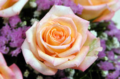 Cream rose. White rose, macro *crisp image Stock Photography