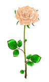 Cream rose with stem and leaves on a white background.Vector il Royalty Free Stock Image