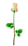 Cream rose with stem and leaves on a white background.Vector ill Royalty Free Stock Photo