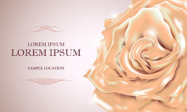 Cream rose with the text on the card or invitation. Vector illus Stock Photo