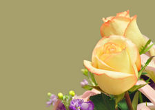 Cream roses in bridal floral arrangement. Beautiful background of flowers and rose buds with copy space to allow for other elements stock photo