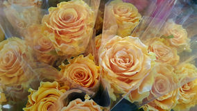 Cream Roses in flower shop. Royalty Free Stock Photography