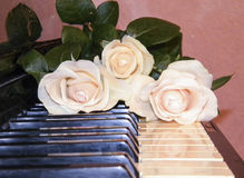 Cream roses on the piano Royalty Free Stock Photo