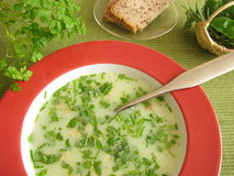 Cream soup with herbs Stock Images