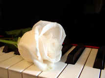 Cream white rose on piano keys. Cream white rose on keys of piano Royalty Free Stock Photo