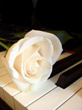 Cream white rose on piano keys. Cream white rose on keys of piano Royalty Free Stock Photos