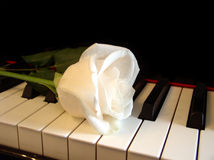 Cream white rose on piano keys. Cream white rose on keys of piano Stock Image