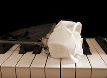 Cream white rose on piano keys - sepia Stock Photo