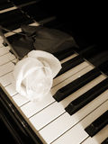 Cream white rose on piano keys - sepia Stock Photos