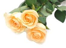 Creame rose Royalty Free Stock Image