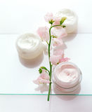 Creams and a sweet pea. Three different creams and fragrant pink sweet pea Stock Images