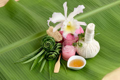Creamy Fresh Herb Mask - Wrap Pandanus. Palm, Ivy Gourd and honey, spa with natural ingredients of Thailand. Stock Photos