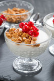 Creamy panna cotta with homemade granola and fresh red currants Royalty Free Stock Photos