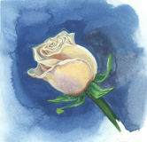 Creamy rose on a blue background. Watercolor painting Stock Photos