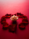 Creamy rose with a red heart from petals Royalty Free Stock Images