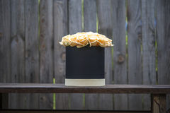 Creamy roses bouquet in black gift box on the background of wooden fence. Stock Images