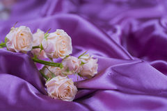 Creamy roses bouquet on purple satin fabric folds Stock Photo