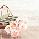 Creamy tulips in the basket Royalty Free Stock Photo