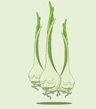 Create Cartoon Green onion Royalty Free Stock Image