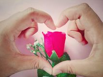 Create hand are heart shape cover rose, beautiful wallpaper, Valentine day Stock Photo