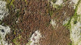 Abstract moorland landscape. Created by dji, camera, dji mavic air drone aerial top view photograph of waldridge moorland at 30m high of brown and green heather stock images