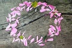Creatief bloemen rond kader stock afbeeldingen