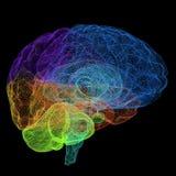 Creatief concept de menselijke hersenen Royalty-vrije Stock Afbeelding